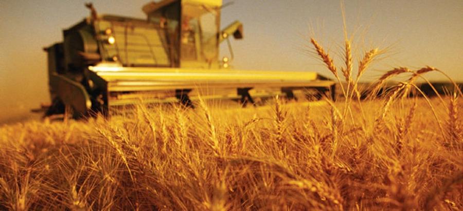 Ургац хураалт дуусаж, 409.6 мянган тонн тариа хураажээ