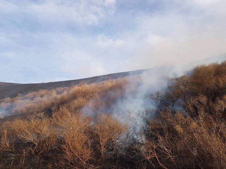 ОХУ-аас хил давж орж ирсэн түймэрт ойн бүсийн 600 га талбай өртөөд байна